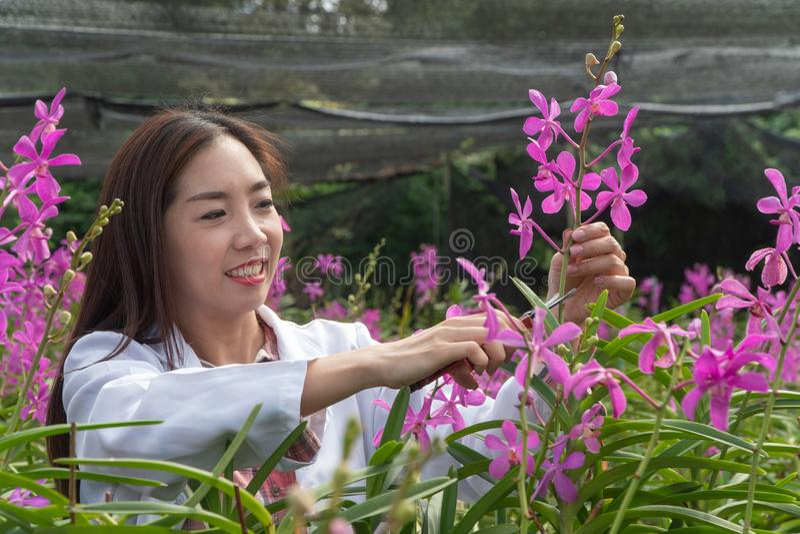 Orchidea botanica di ricerca del ricercatore felice che indossa un cappuccio bianco e che taglia il fiore dell'orchidea per ricer fotografia stock