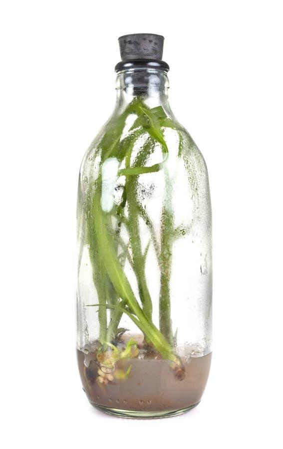 Orchidea in bottiglia immagine stock libera da diritti