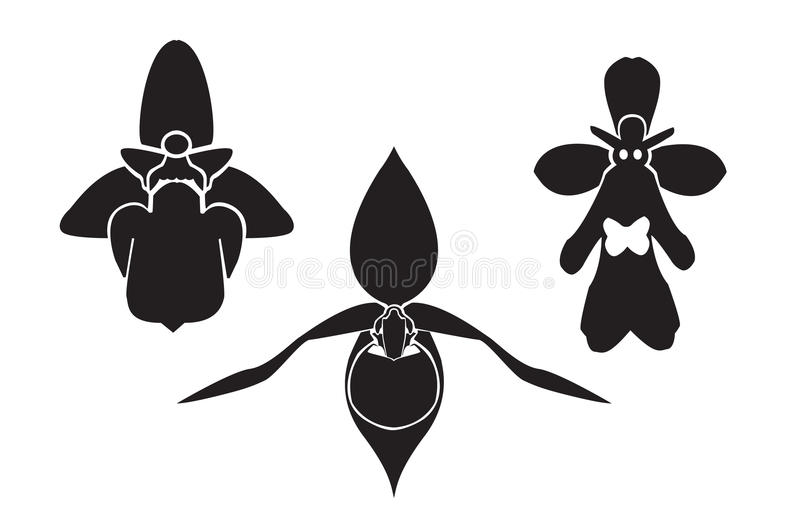 Orchidea ceca - siluetta immagini stock