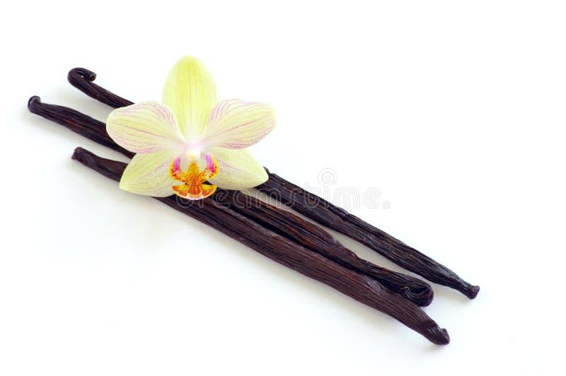 Orchidea con i baccelli di vaniglia fotografia stock