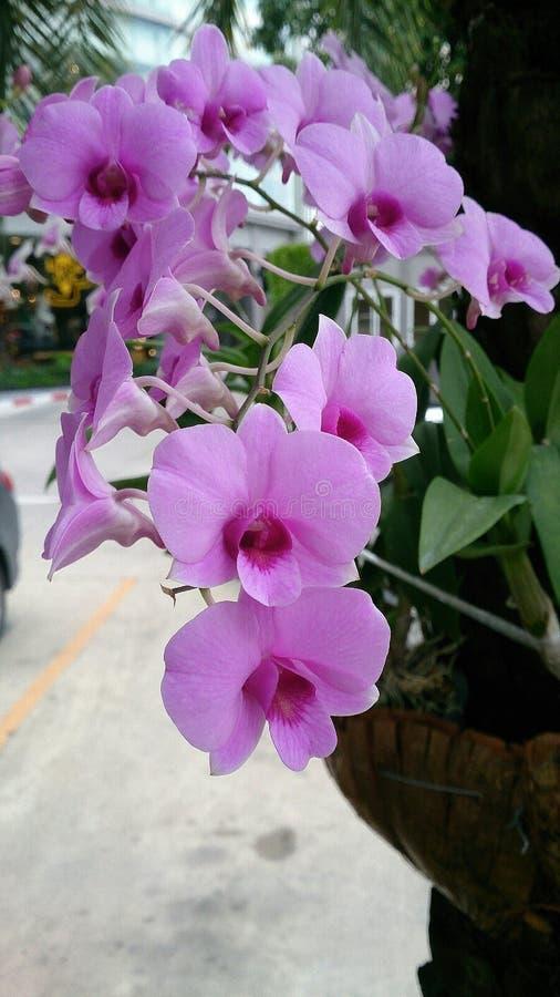 orchidea del mazzo fotografia stock libera da diritti