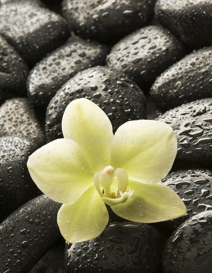 Orchidea della stazione termale immagine stock