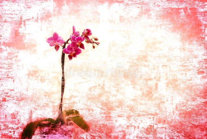 Orchidea dentellare royalty illustrazione gratis