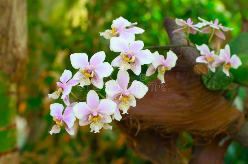 Orchidea di fioritura nella foresta pluviale fotografia for Orchidea fioritura