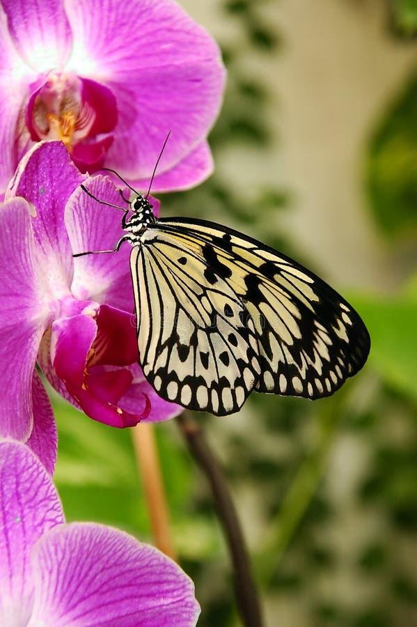 Orchidea e farfalla. immagini stock libere da diritti