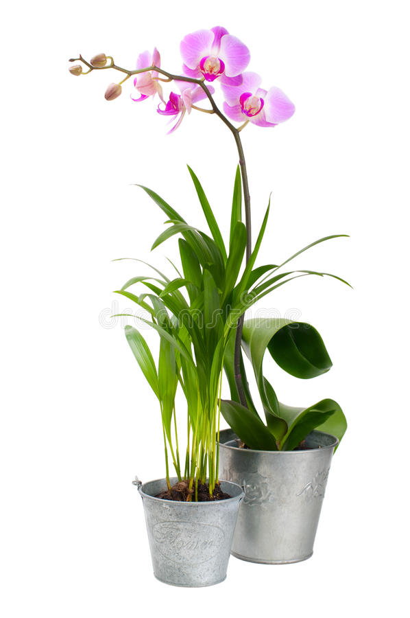 Orchidea e pianta tropicale immagine stock immagine di for Orchidea pianta