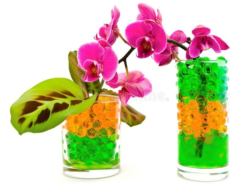 Orchidea e piante in vetro con idrogelo fotografia stock libera da diritti