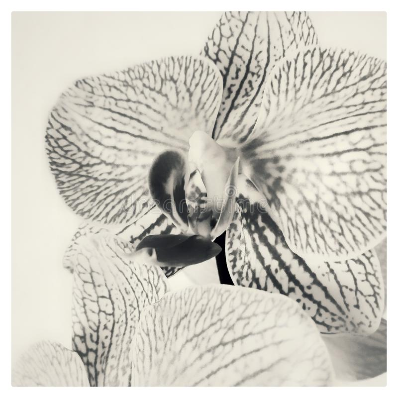Orchidea flower stock photos