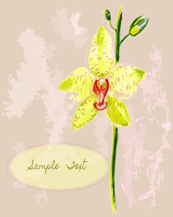 Orchidea gialla immagine stock