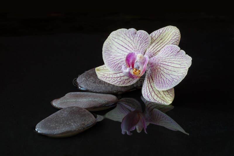 Orchidea i kamienie w wodzie z odbiciem fotografia royalty free