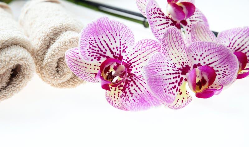 Orchidea kwiaty, zieleń ręczniki na białym tle i liście i obrazy stock