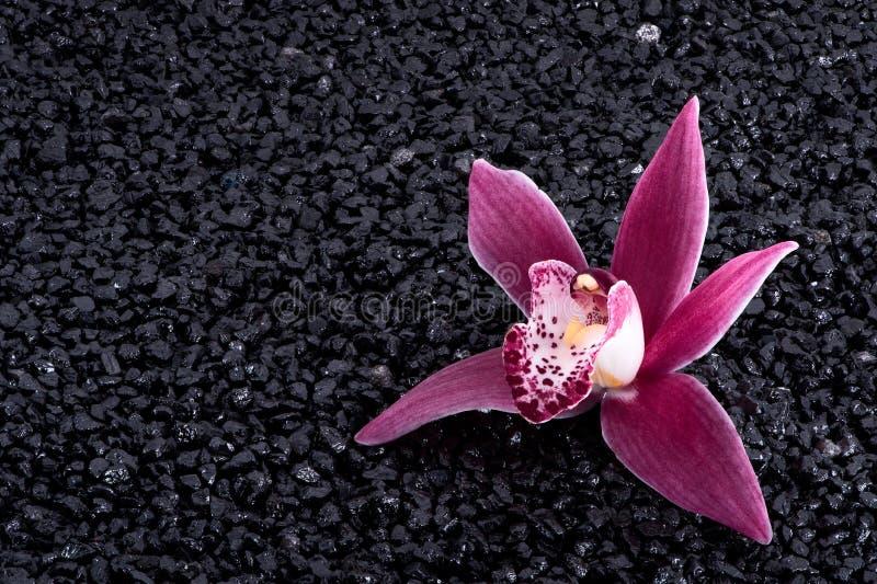 Orchidea magenta sul nero fotografia stock