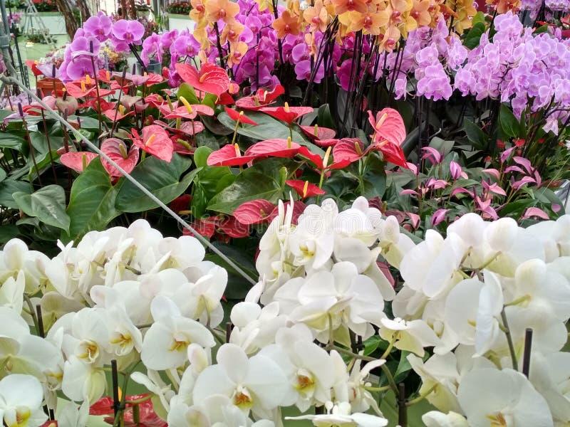 Orchidea nel giardino fotografia stock libera da diritti