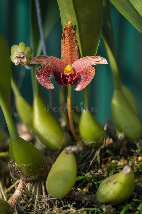 Orchidea nella nave fotografie stock libere da diritti