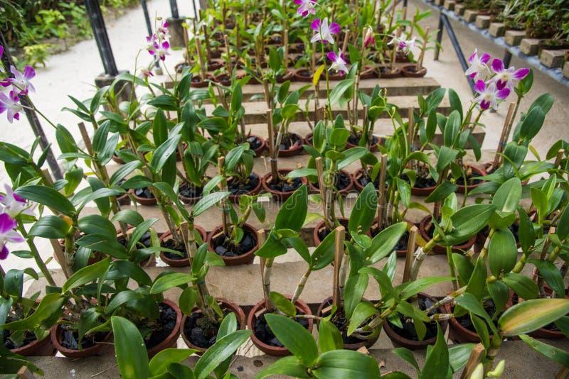 Orchidea ogród fotografia stock