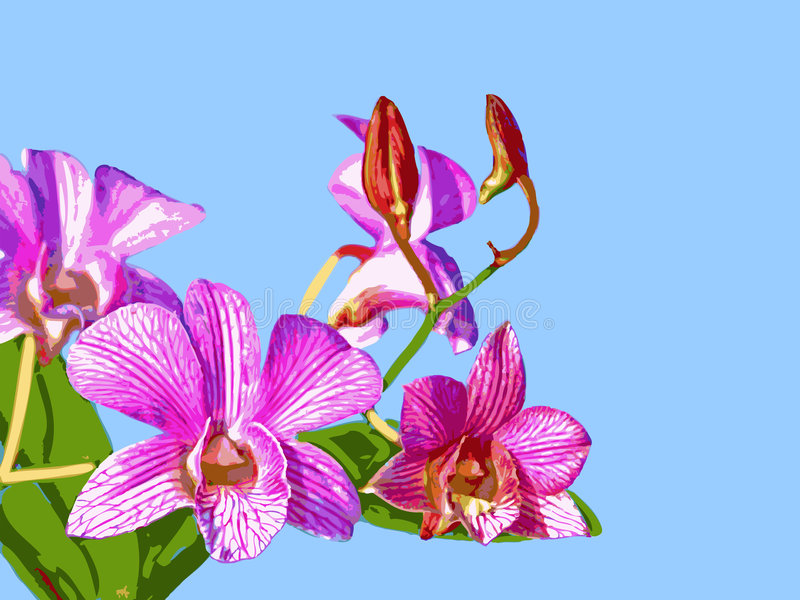 Orchidea: Ortgies Cattleyopsis immagine stock libera da diritti