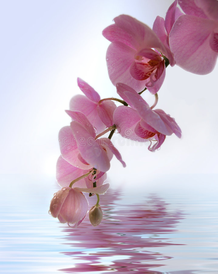 orchidea powodzi, zdjęcia stock