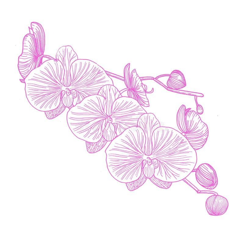 Orchidea ręka patroszona grafit royalty ilustracja