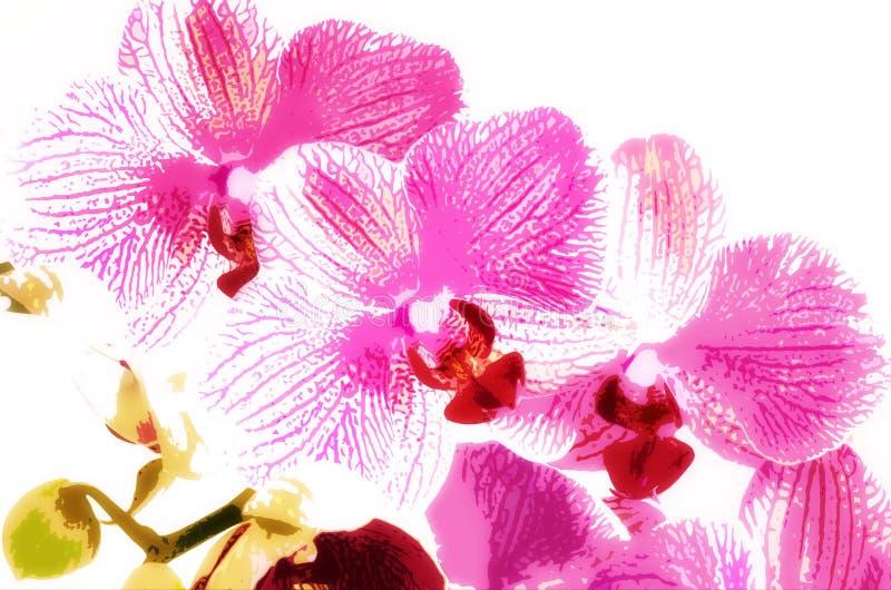 Orchidea rosa, simulazione di arti fotografia stock libera da diritti