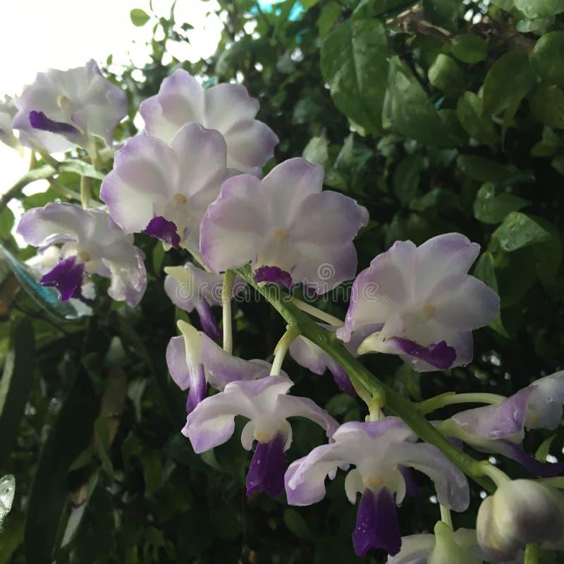Orchidea rosso-chiaro tropicale nel giorno nuvoloso immagini stock libere da diritti