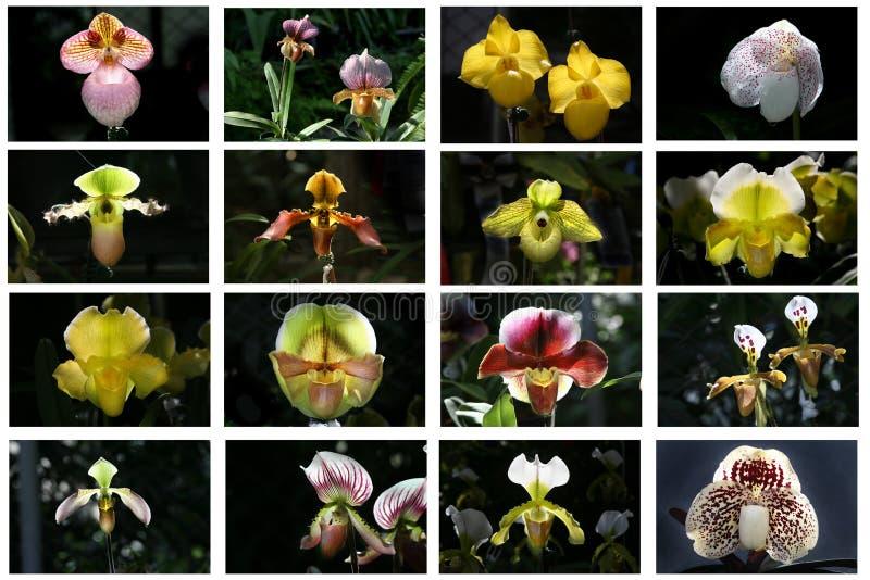 orchidea stół zdjęcie stock