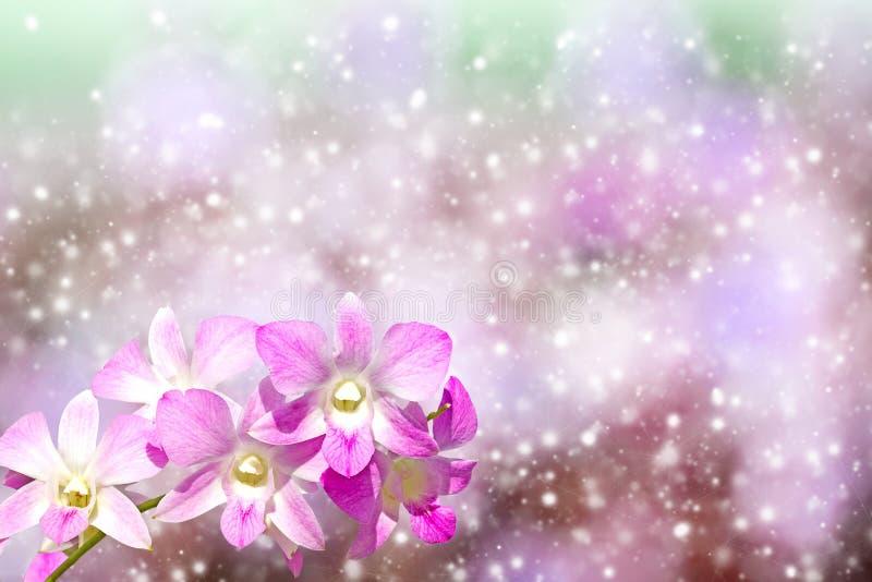 Orchidea sul bokeh del fondo fotografia stock libera da diritti