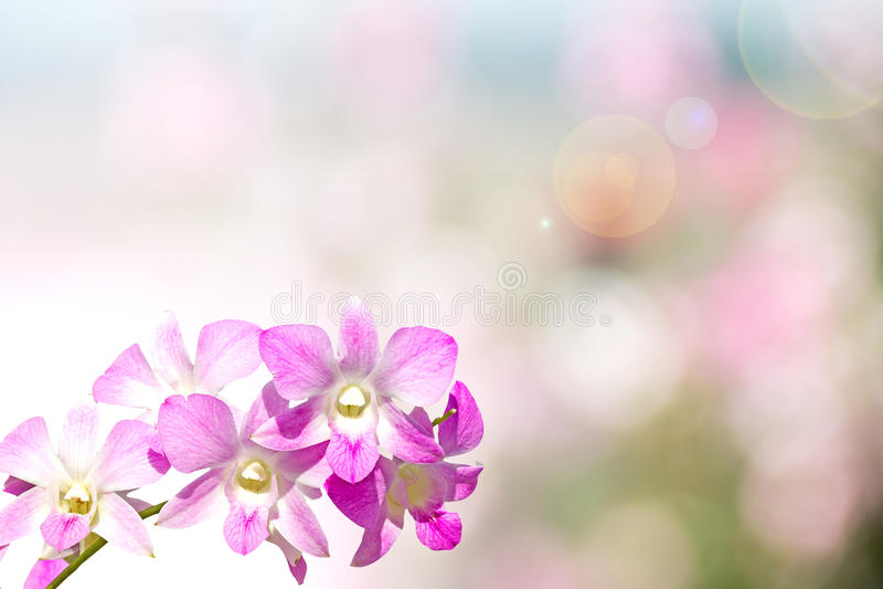 Orchidea sul bokeh del fondo fotografia stock