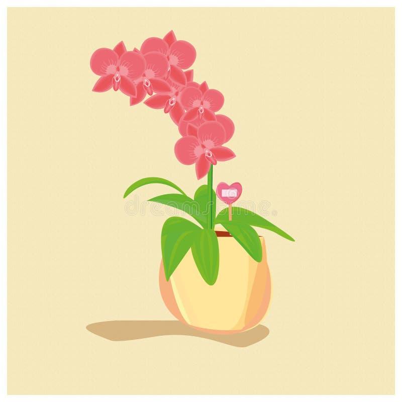 Orchidea in un vaso su un fondo giallo illustrazione di stock