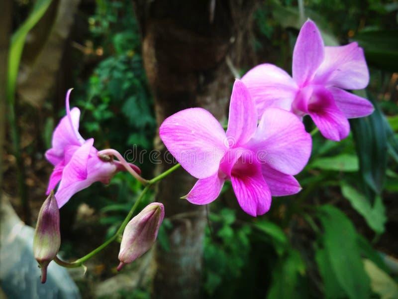 Orchidea w ogródzie obraz royalty free