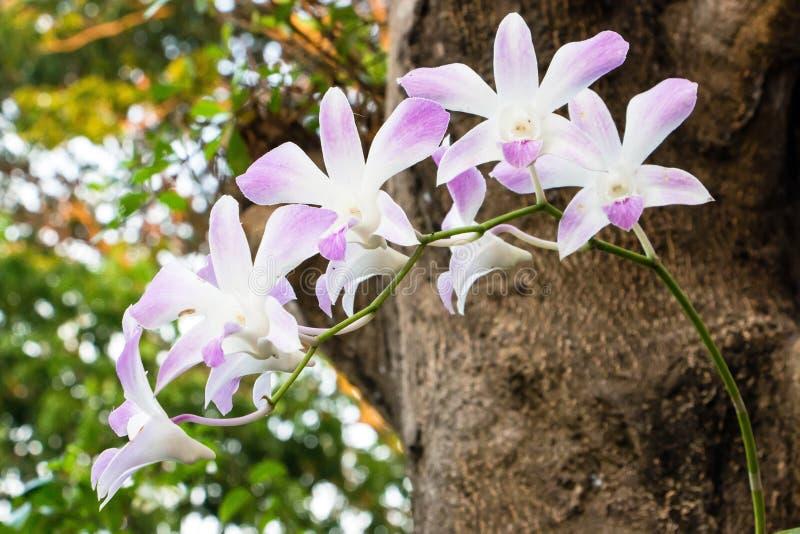 Orchidea w podwórka ogródzie fotografia royalty free