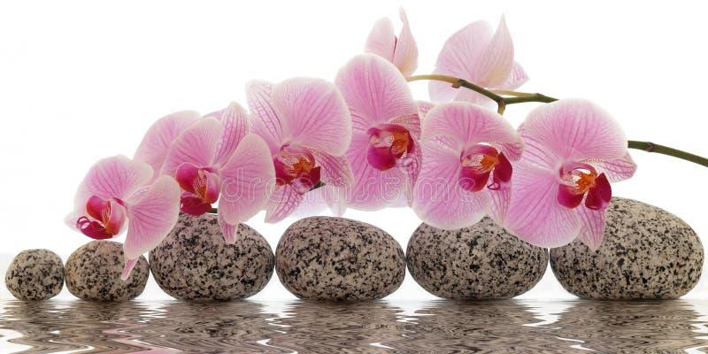Orchidea z wodnym odbiciem zdjęcie royalty free