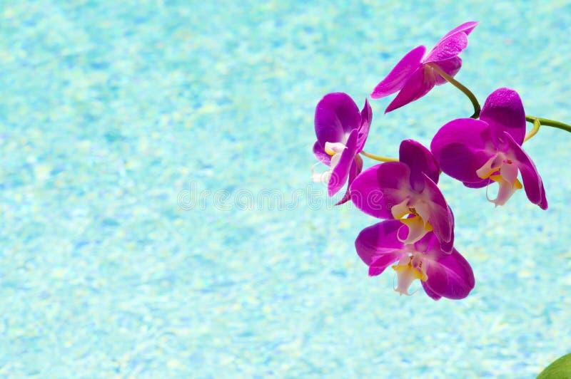 ORCHIDEEËN DOOR DE POOL royalty-vrije stock foto