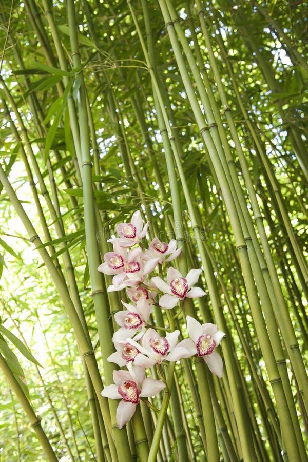 Orchideeën en de Stelen van het Bamboe stock foto
