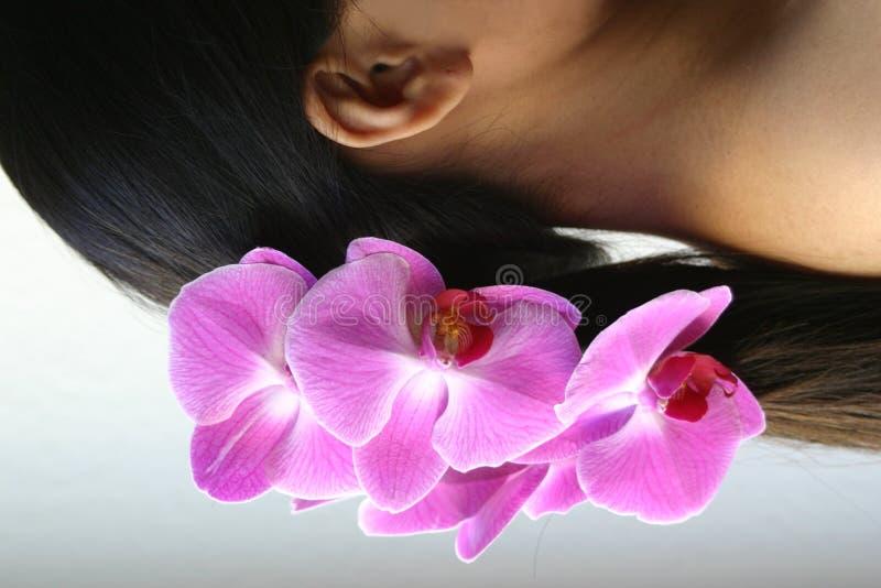 Orchideeën en paardestaart stock afbeelding
