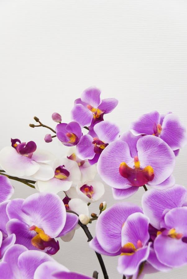Orchideeën tegen witte muur royalty-vrije stock afbeeldingen