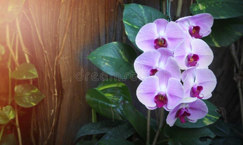 Muur Van Tropische Orchideeën Stock Afbeelding