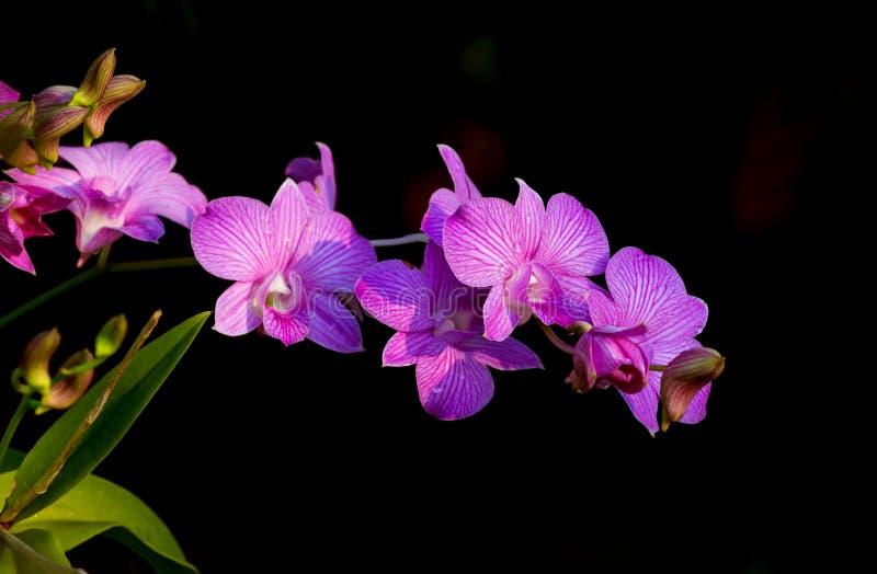 Orchideeënbloemen stock afbeeldingen