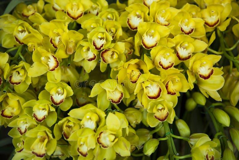 Orchideeënbloesem stock foto's