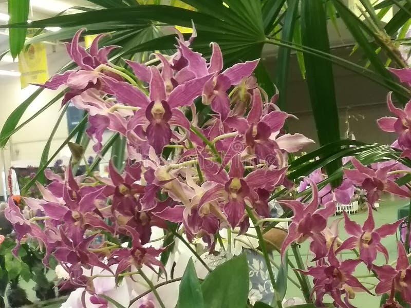 orchidee obraz stock