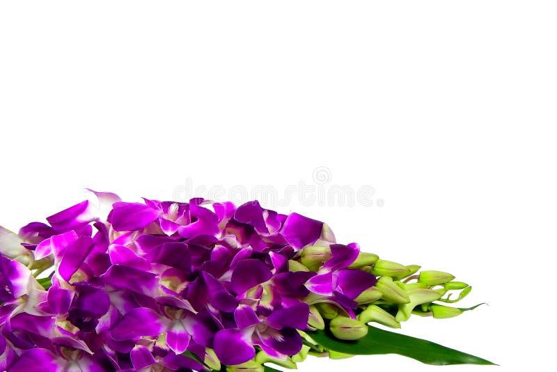 Download Orchidee zdjęcie stock. Obraz złożonej z liść, lato, menchie - 13338286