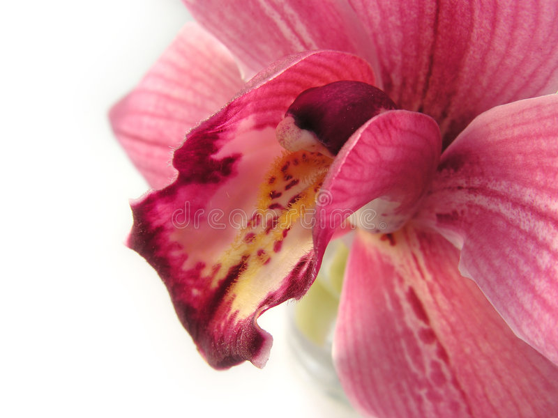 Orchidee 2 stockfoto