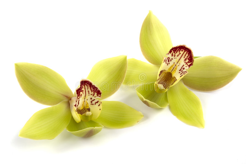 Orchidee royalty-vrije stock fotografie