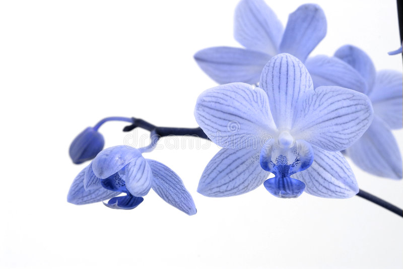 orchidee obrazy stock