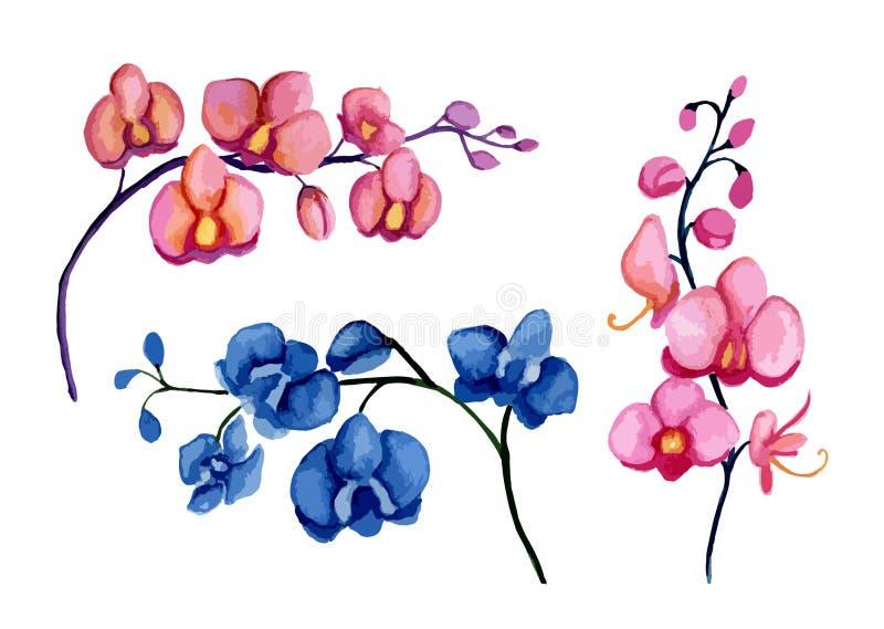 Download Orchidee ilustracja wektor. Ilustracja złożonej z lato - 57671033