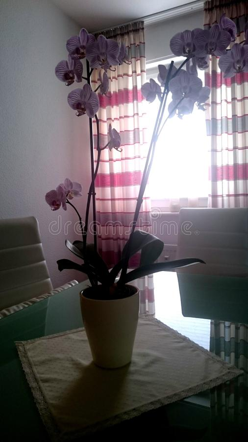 Orchidee images stock