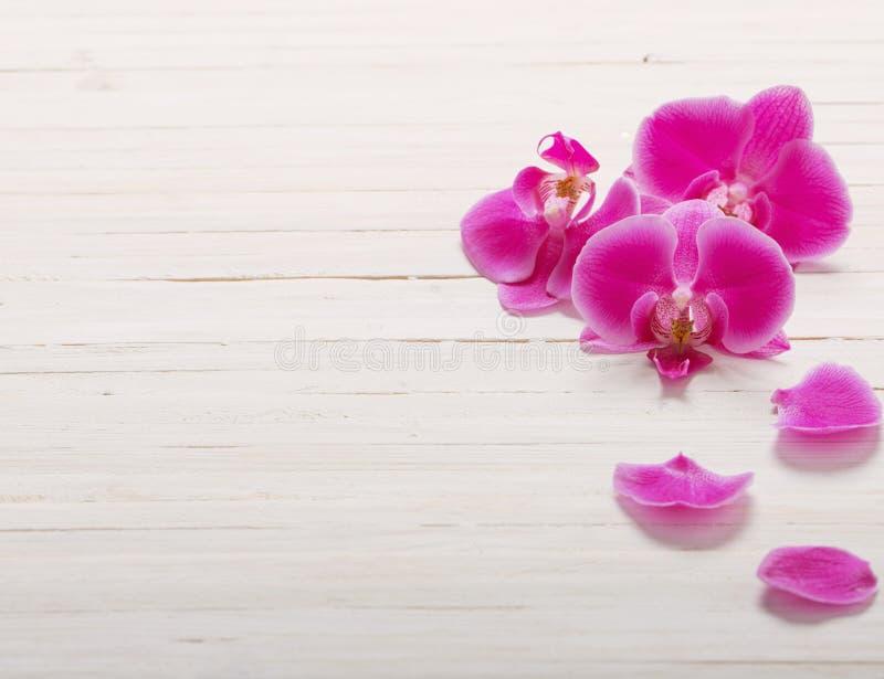 Orchidee auf hölzernem Hintergrund lizenzfreie stockfotografie