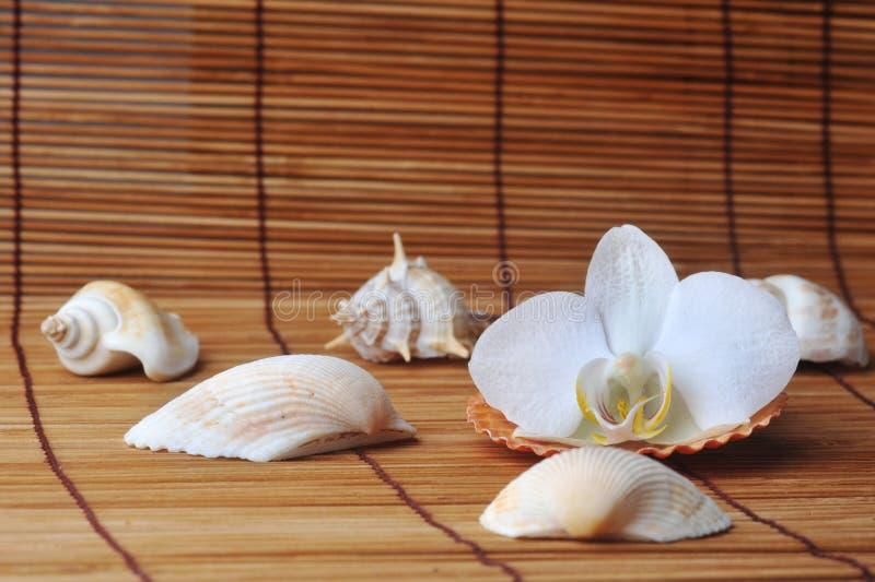 Orchidee auf Strohserviette stockfotografie