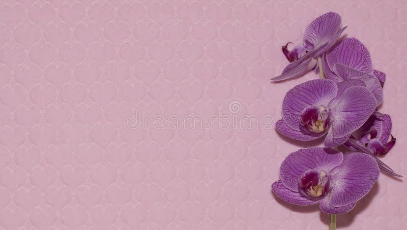 Orchidee auf Textilhintergrund mit Herzen stockbilder