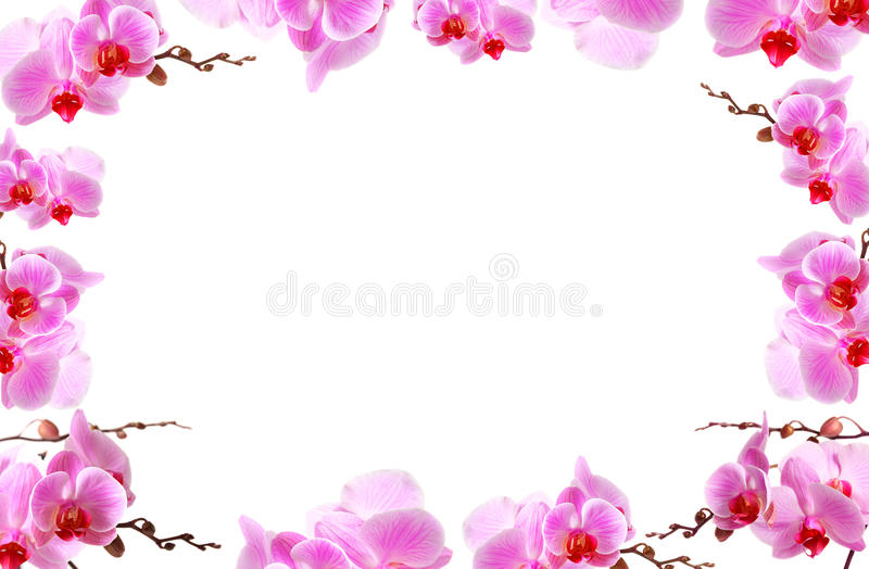 Orchidee blüht Rand mit weißem Exemplarplatz stockbild