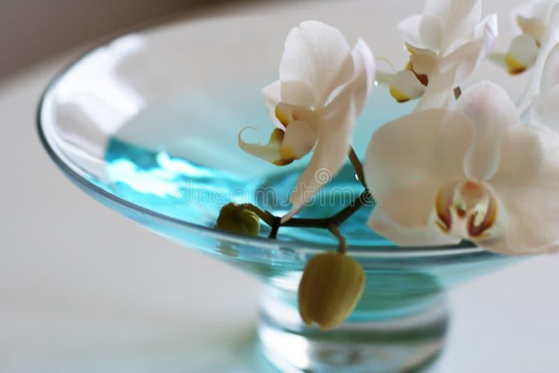 Orchidee in blauwe vaas royalty-vrije stock afbeeldingen